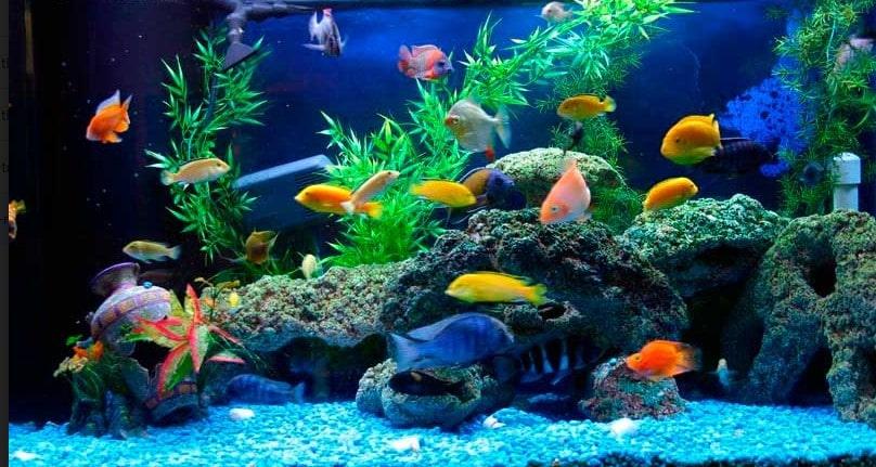 shop cá cảnh ở hà nội