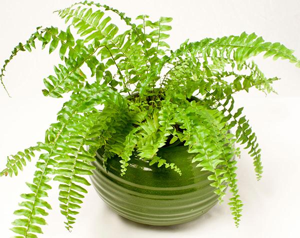 Các loại cây thảo mộc có khả năng khử mùi