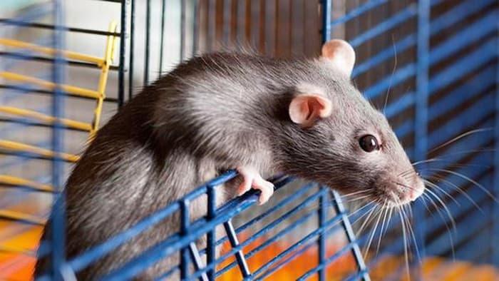 Công ty diệt chuột An Nam
