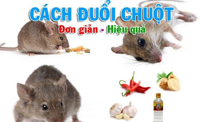 Diệt chuột Hà Nội