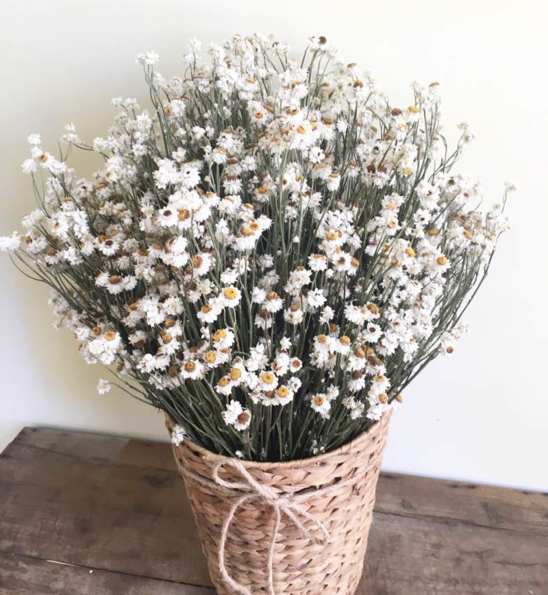 hoa khô Hà Nội