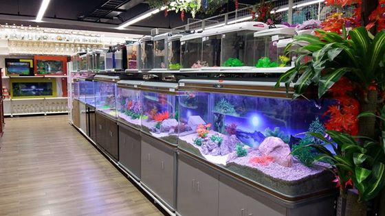 shop thủy sinh hà nội